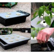 grow tank fiori